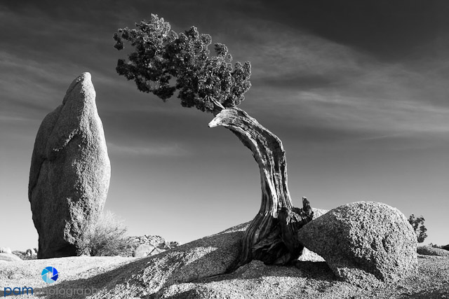 1204_PSA_Joshua Tree_023-Edit-Edit