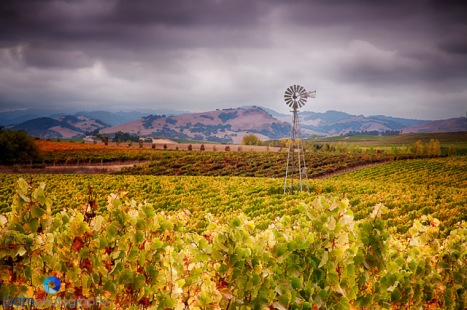 Windmill on Las Amigas Road, Sonoma, CA