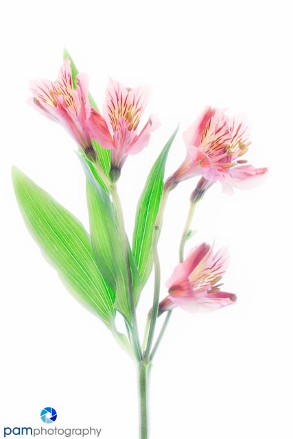 1301_MFA_Art Flowers_011-Edit