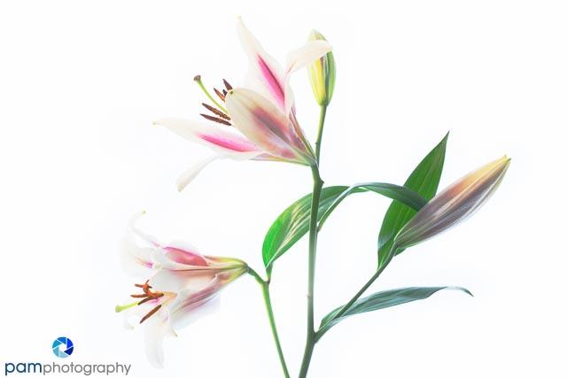 1301_MFA_Art Flowers_015-Edit
