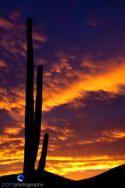 Sunrise in Saguaro National Park, AZ