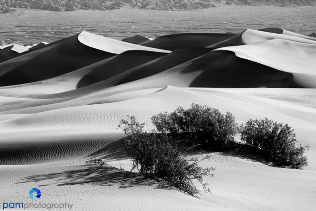The Large Dunes at Stovepipe Wells, Death Valley CA