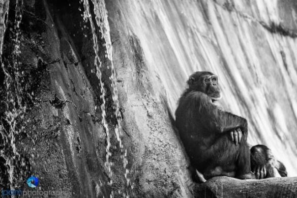 1305_MFA_Animals_273-2-Edit