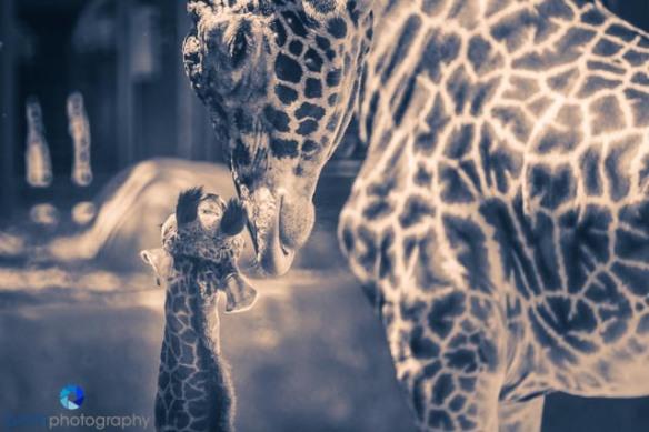 1305_MFA_Animals_295