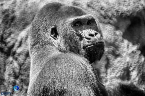 1305_MFA_Animals_335-Edit