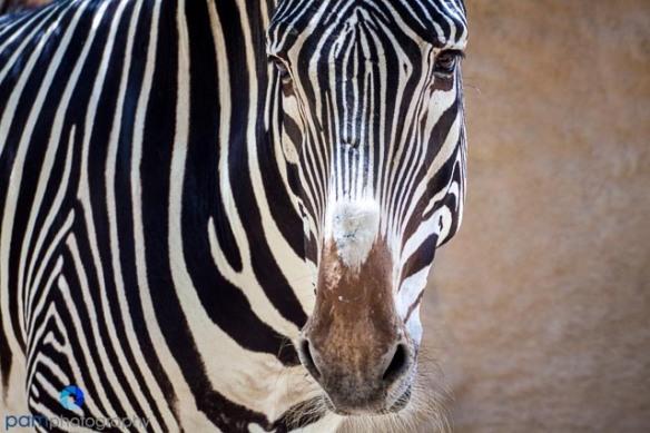1305_MFA_Animals_407