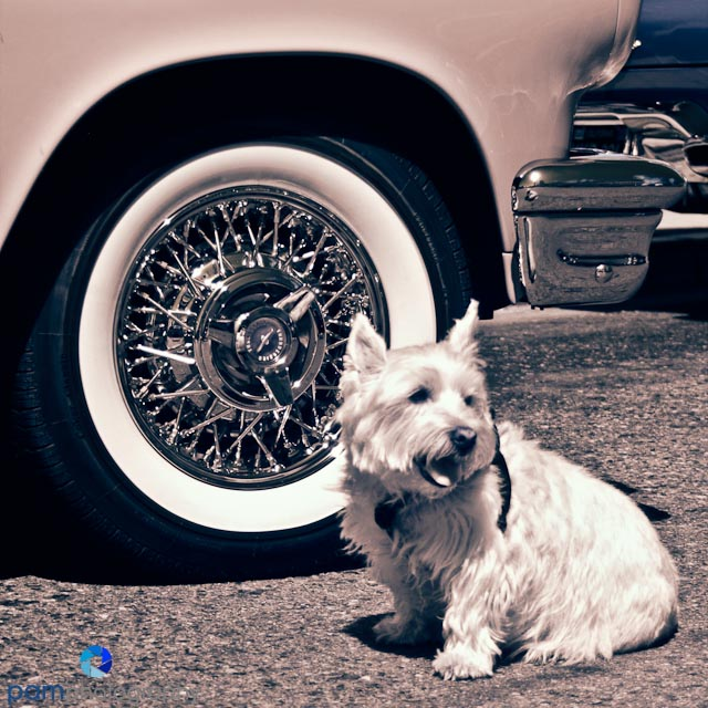 Walking through a car show in Old Town, San Diego, we ran into a cute dog named Brewster