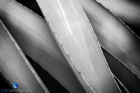 1304_MFA_Arboretum_058-Edit