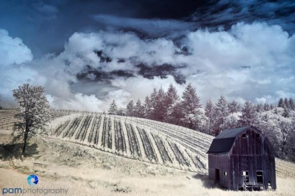 1106_MFA_Oregon Infrared_277-Edit