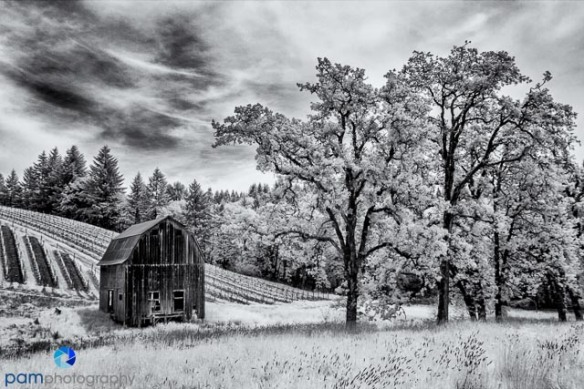 1305_MFA_Portland Infrared_068-Edit