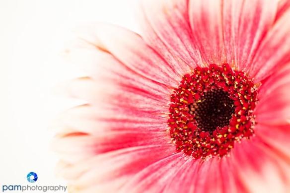 1310_MFA_Flowers_001