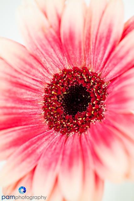 1310_MFA_Flowers_002