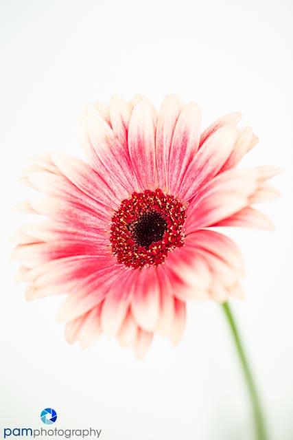 1310_MFA_Flowers_004