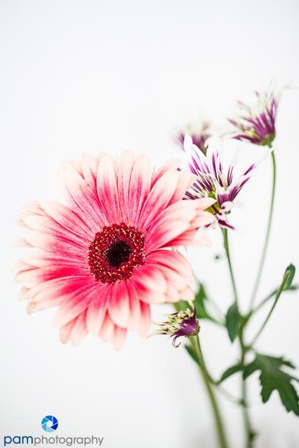 1310_MFA_Flowers_008