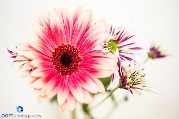 1310_MFA_Flowers_013