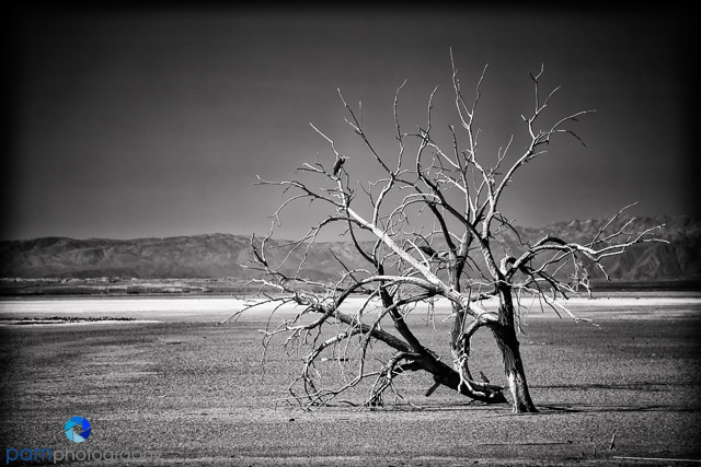 1310_PSA_Salton Sea Infrared_007-Edit