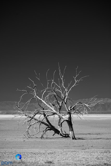 1310_PSA_Salton Sea Infrared_009-Edit