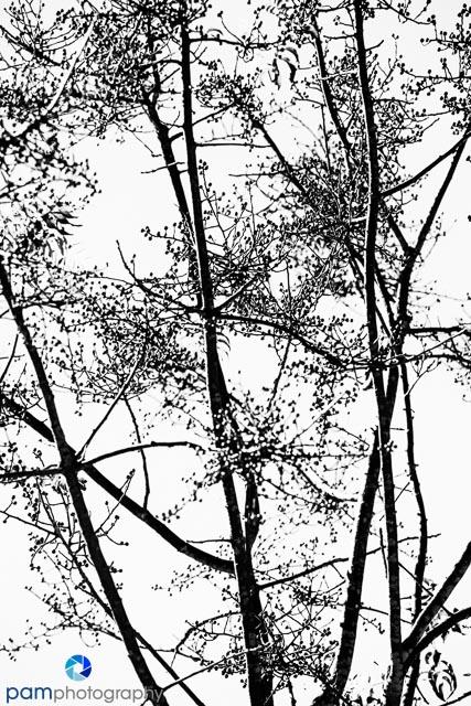 1311_MFA_Napa_044-Edit-Edit