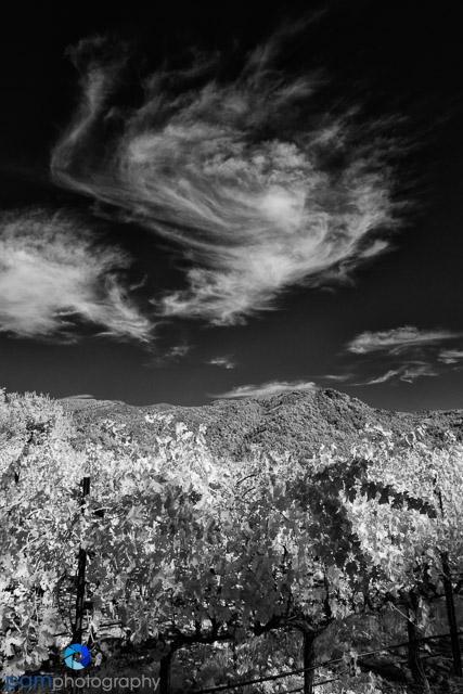 1311_PSA_Napa IR_273-Edit