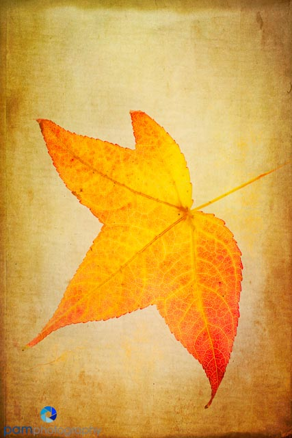 1311_MFA_Leaves_027-Edit