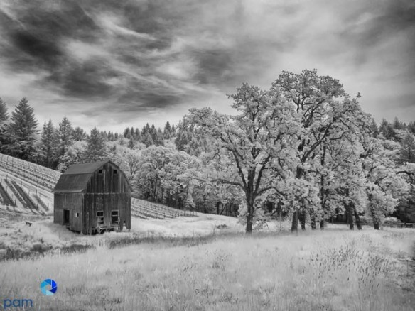 The barn at the Colene Clemons Winery near Dundee, OR