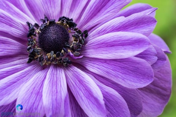 1402_MFA_Flower_003