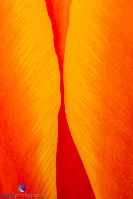 1402_MFA_Flower_026