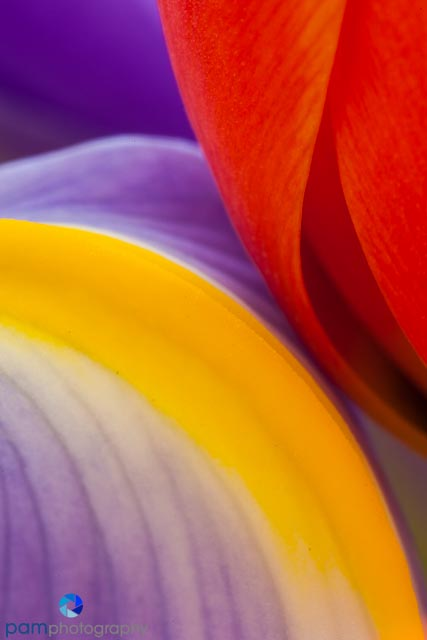 1402_MFA_Flower_032