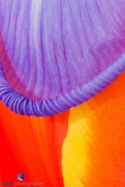 1402_MFA_Flower_034