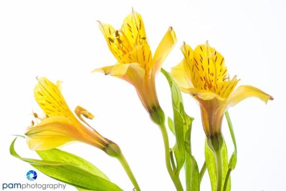 1402_MFA_flower_036