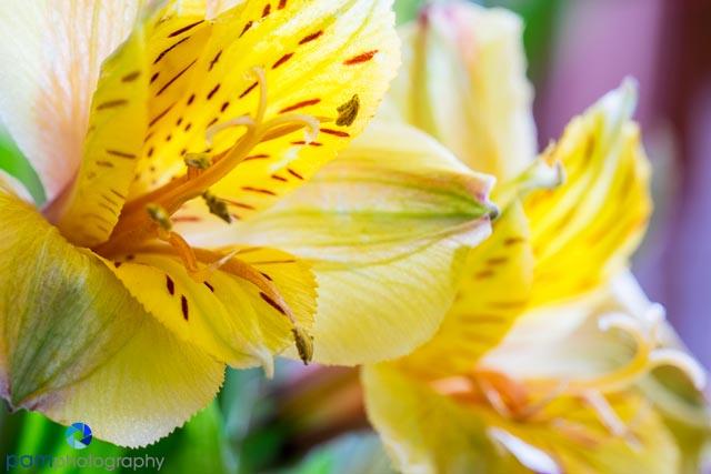 1402_MFA_flower_056