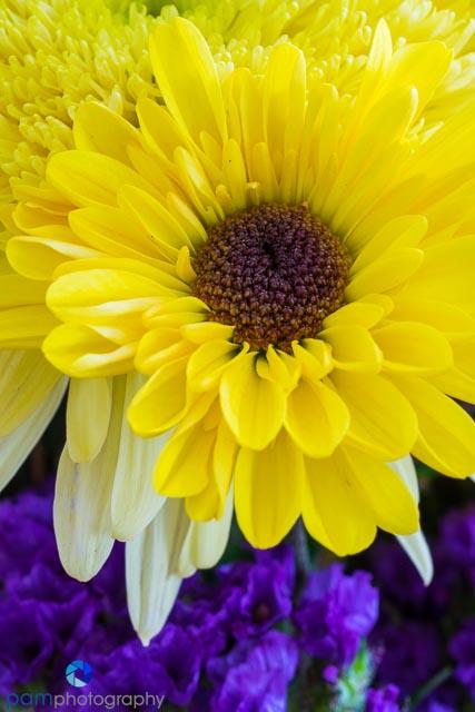 1402_MFA_flower_070
