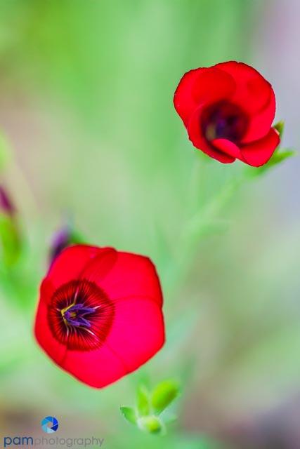 1403_MFA_Flower_305