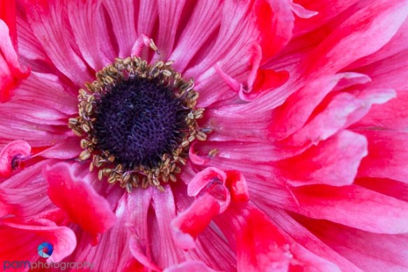 1403_MFA_Flower_360