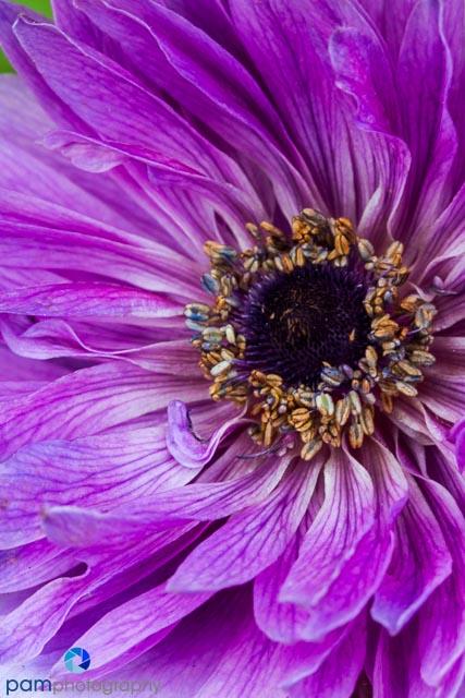 1403_MFA_Flower_377
