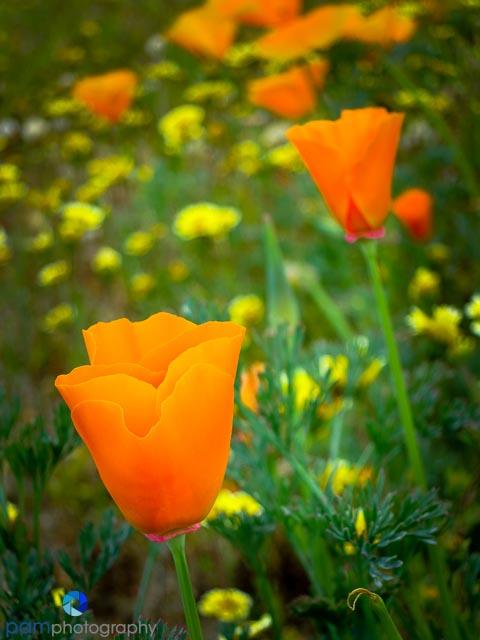 1403_MFA_flowers_509