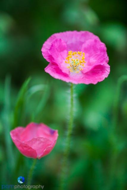 1404_MFA_Flowers_006