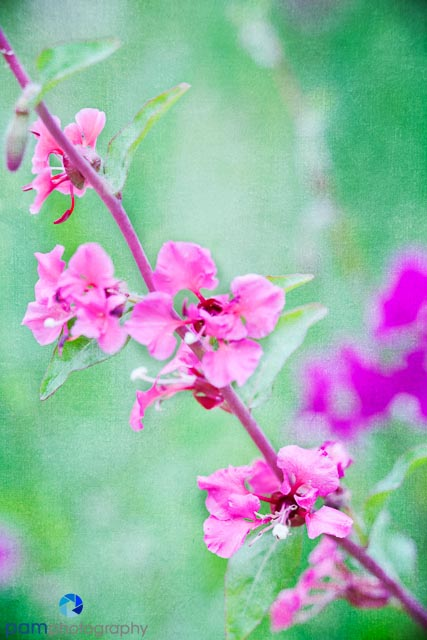 1404_MFA_Flowers_013-Edit