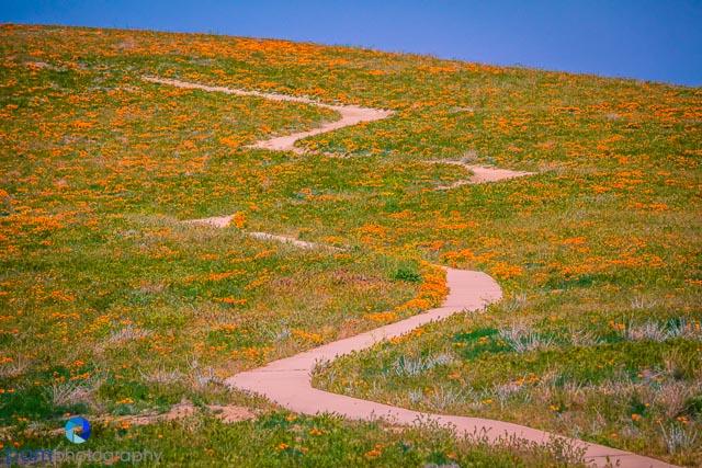 1404_MFA_Antelope Valley_009-Edit