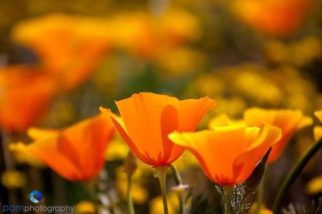 1404_MFA_Antelope Valley_049
