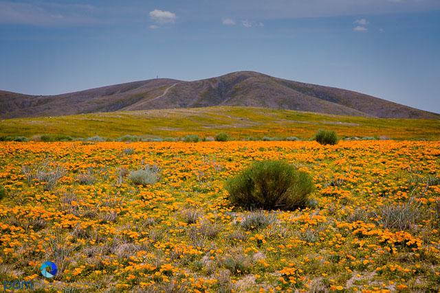 1404_PSA_Antelope Valley_021