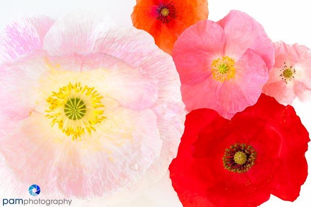 1405_MFA_Flowers_014