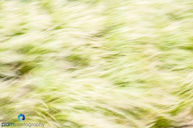1405_MFA_DU Abstracts_196