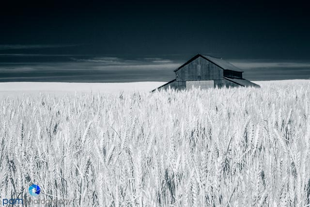 1406_MFA_Palouse Infrared_1173-Edit