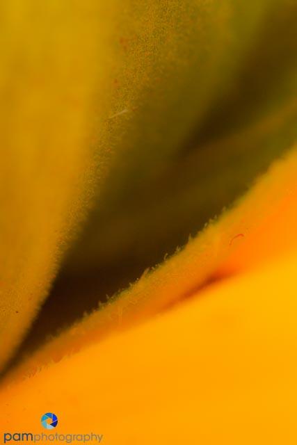 Sunflower 1 - Original