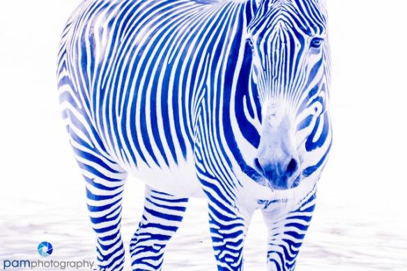 1407_MFA_zoo infrared_0091