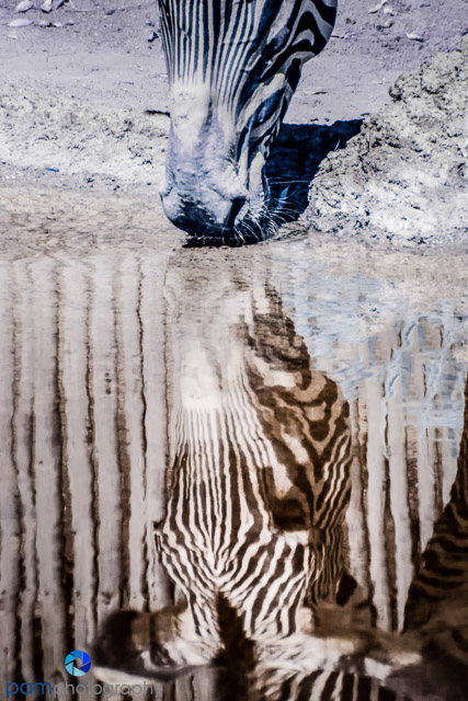 1407_MFA_zoo infrared_0118-Edit