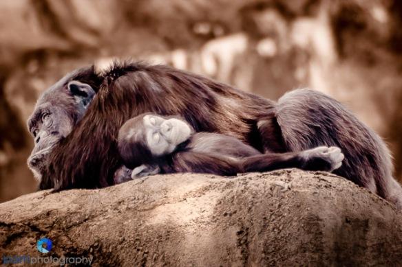 1407_MFA_zoo infrared_0161