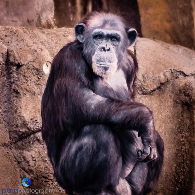 1407_MFA_zoo infrared_0163