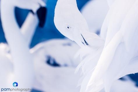 1407_MFA_zoo infrared_0210